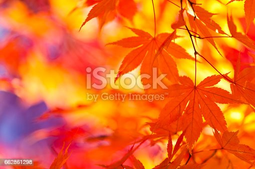 close up of autumn leaves in the morning
