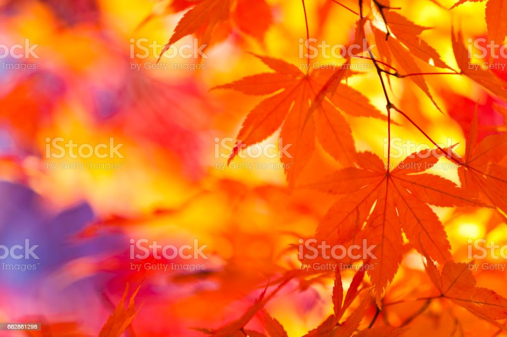 Vibrant Colors of Autumn Leaves stock photo