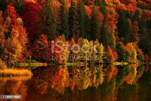 istock Vibrant colors of autumn trees 1188978982