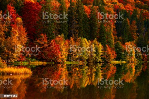 Photo of Vibrant colors of autumn trees