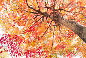 looking up at autumnal trees in the forest