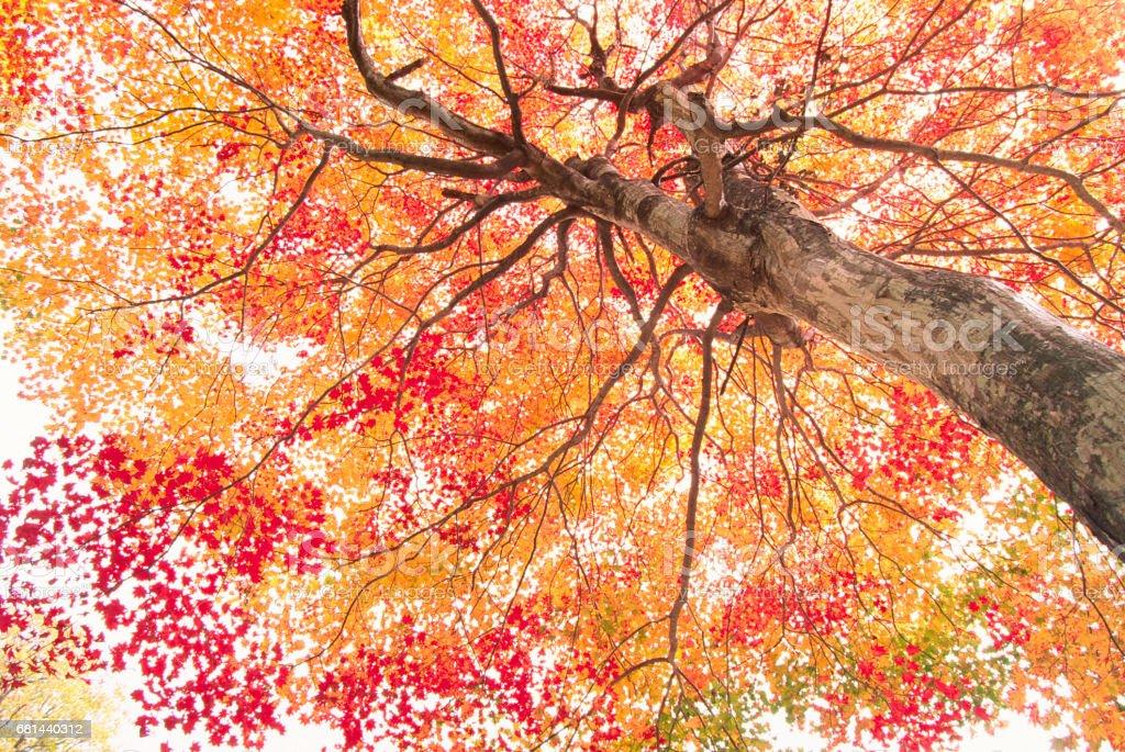 Vibrant Colors of Autumn Trees stock photo