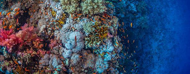 Vibrant Coral Reef stock photo
