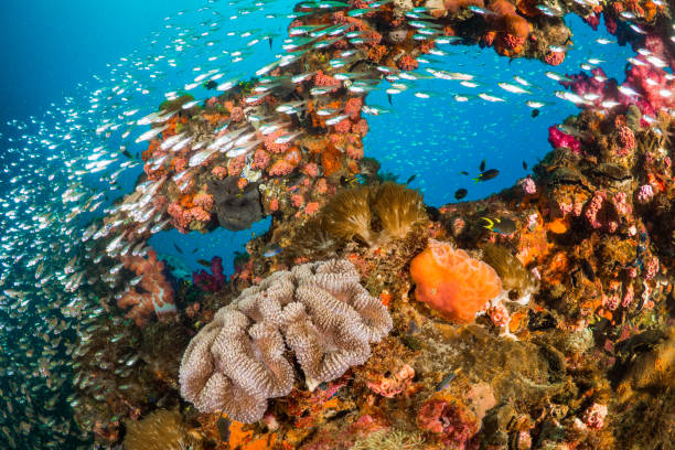 vibrant coral reef with hundreds of glass fish - artificial reef stock pictures, royalty-free photos & images