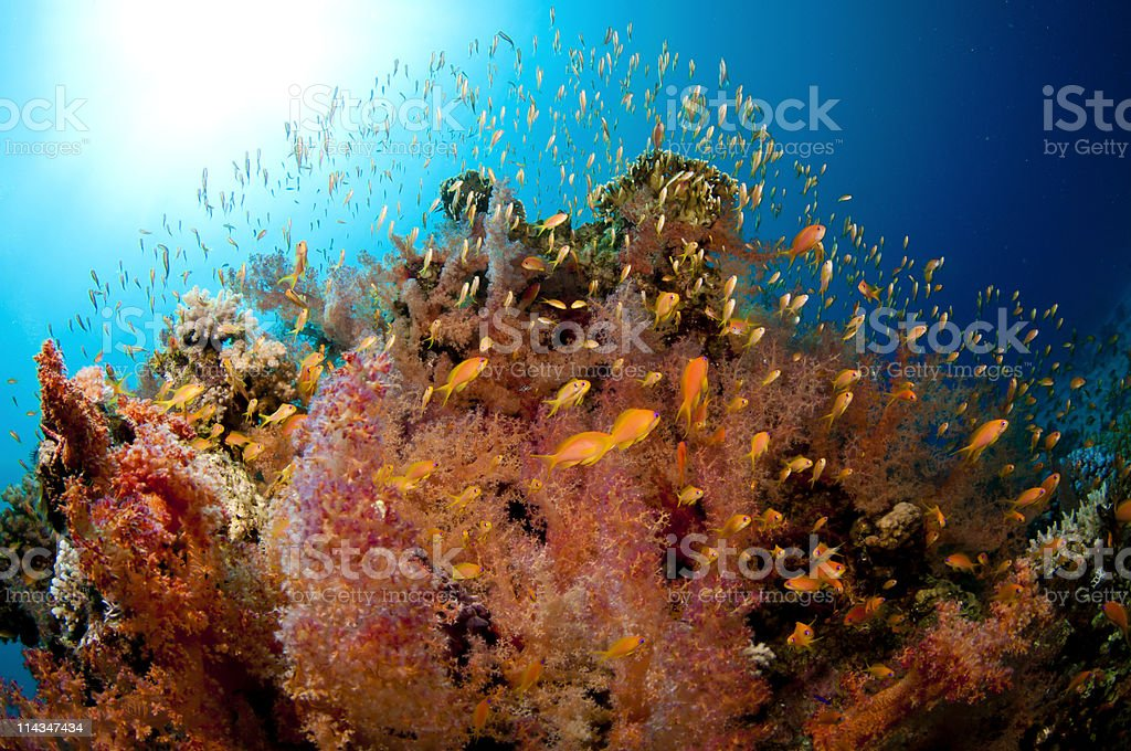 vibrant coral reef with lots of fish stock photo