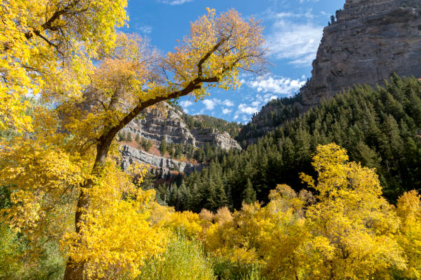 Vibrant Fall Colors in Provo Canyon Utah Near Upper Falls This shot shows the very bright colors of changing leaves on the trees near the Upper Falls waterfall in Provo Canyon, Utah.  In the background is a canyon between two, rocky mountain peaks. cottonwood tree stock pictures, royalty-free photos & images