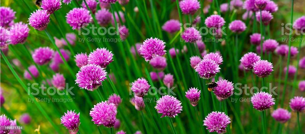 Lebhaftes Blumenmuster Farben – Foto