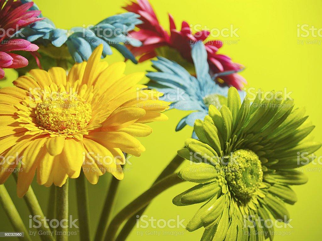 Vibrant Flowers royalty-free stock photo