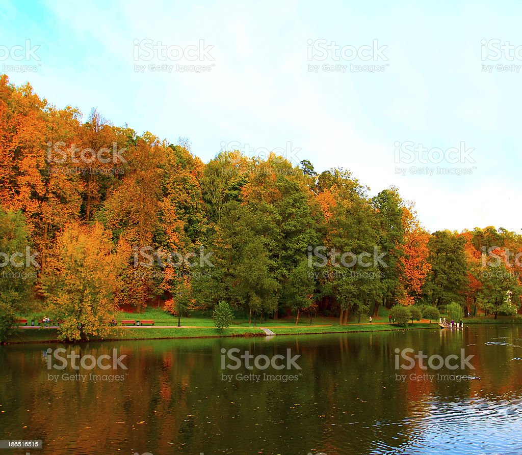 vibrant forest over lake royalty-free stock photo