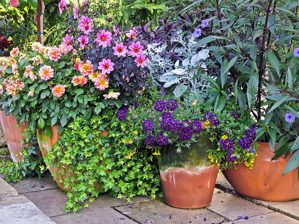 Vibrant garden display stock photo