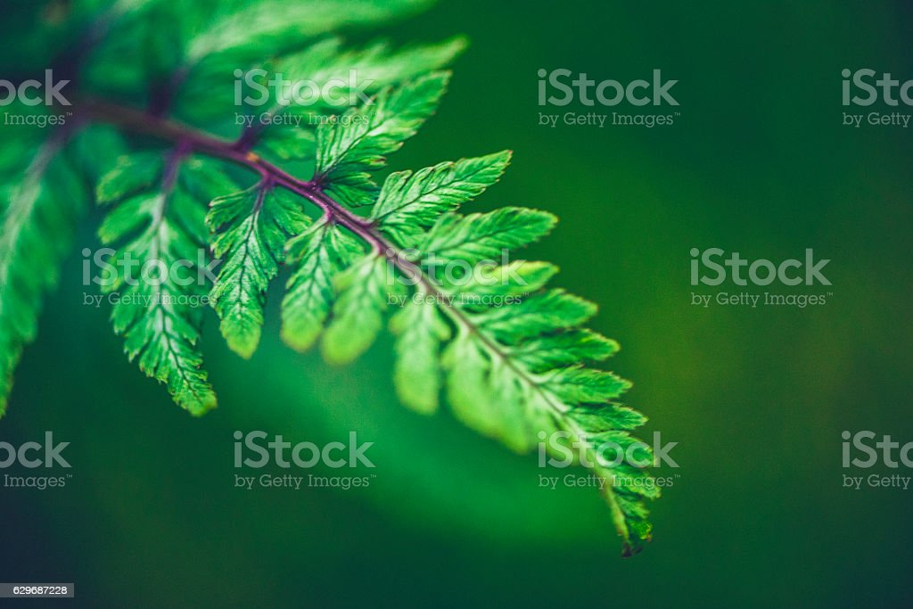 Vibrant green fern leaf growing in nature stock photo