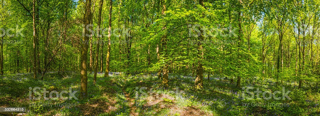 Vibrant green foliage in idyllic wildflower woodland forest glade panorama stock photo