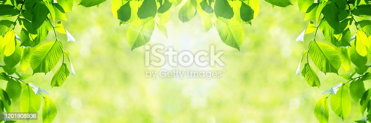 istock Vibrant green leaves background 1201908936