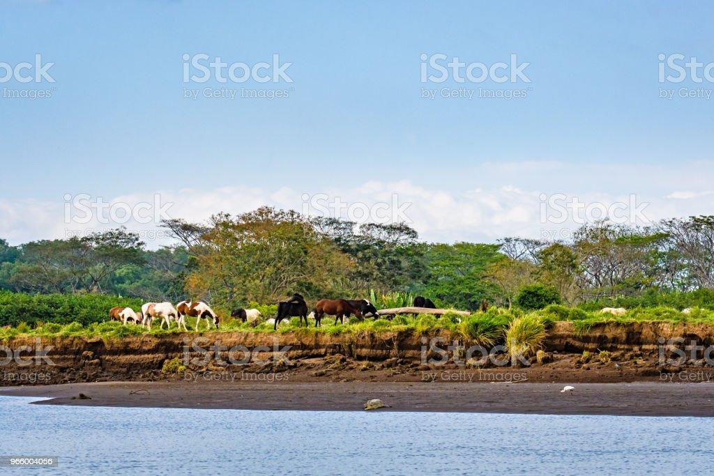 Levande landskap med hästar - Royaltyfri Beta - Djurbeteende Bildbanksbilder