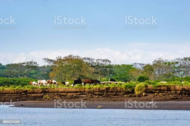 Levande Landskap Med Hästar-foton och fler bilder på Beta - Djurbeteende