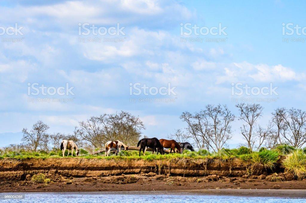 Lebendige Landschaft mit Pferden - Lizenzfrei Baum Stock-Foto