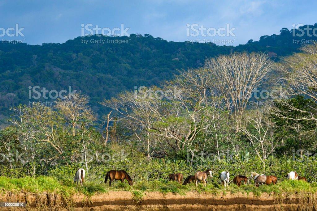 Levendige landschap met paarden - Royalty-free Boom Stockfoto