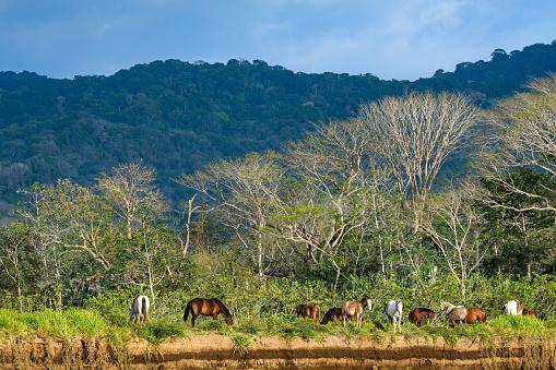 Levendige Landschap Met Paarden Stockfoto en meer beelden van Boom