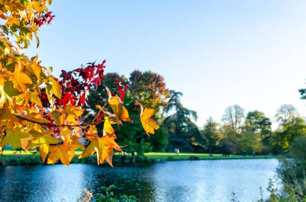 Vibrant leaves in autumn stock photo