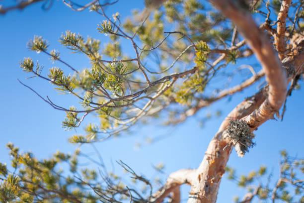 Dynamische Natur – Foto