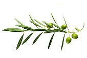 istock Vibrant olive tree branch with berries on white 852442722