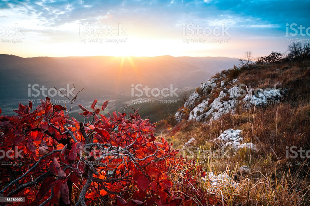Vibrant Red Autumn Bush At Sunset stock photo