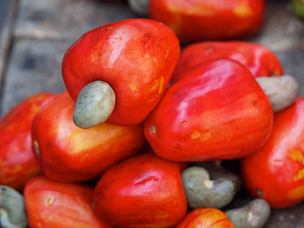 vibrant red cashew nut fruit - cashew stock photos and pictures