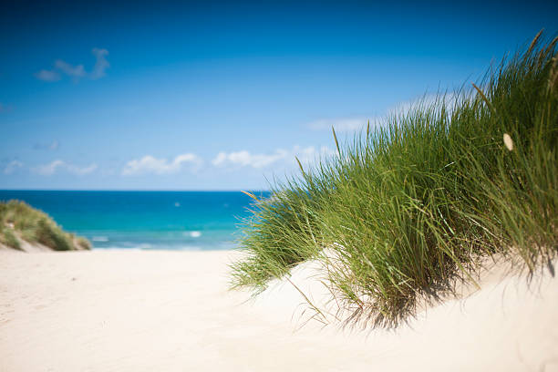 vibrant sand dunes at crantock beach, newquay, cornwall. - cornwall stock pictures, royalty-free photos & images