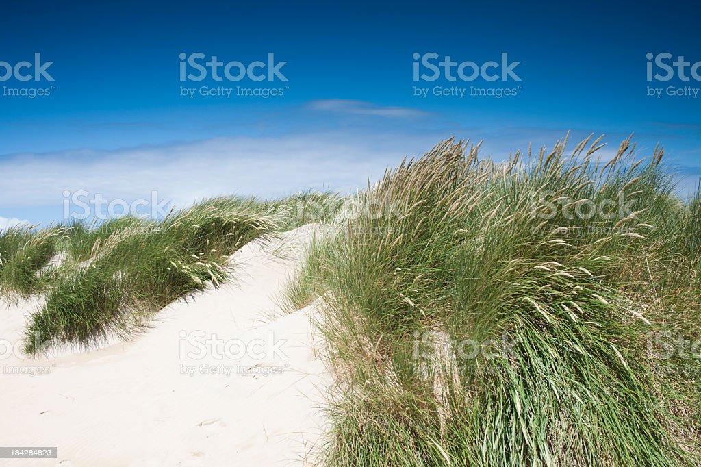 Vibrant Sand Dunes at Crantock Beach, Newquay, Cornwall. stock photo