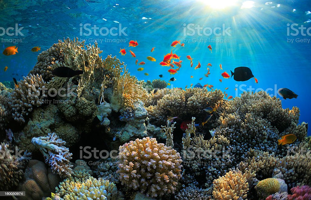 A vibrant shallow coral reef with fish surrounding it stock photo