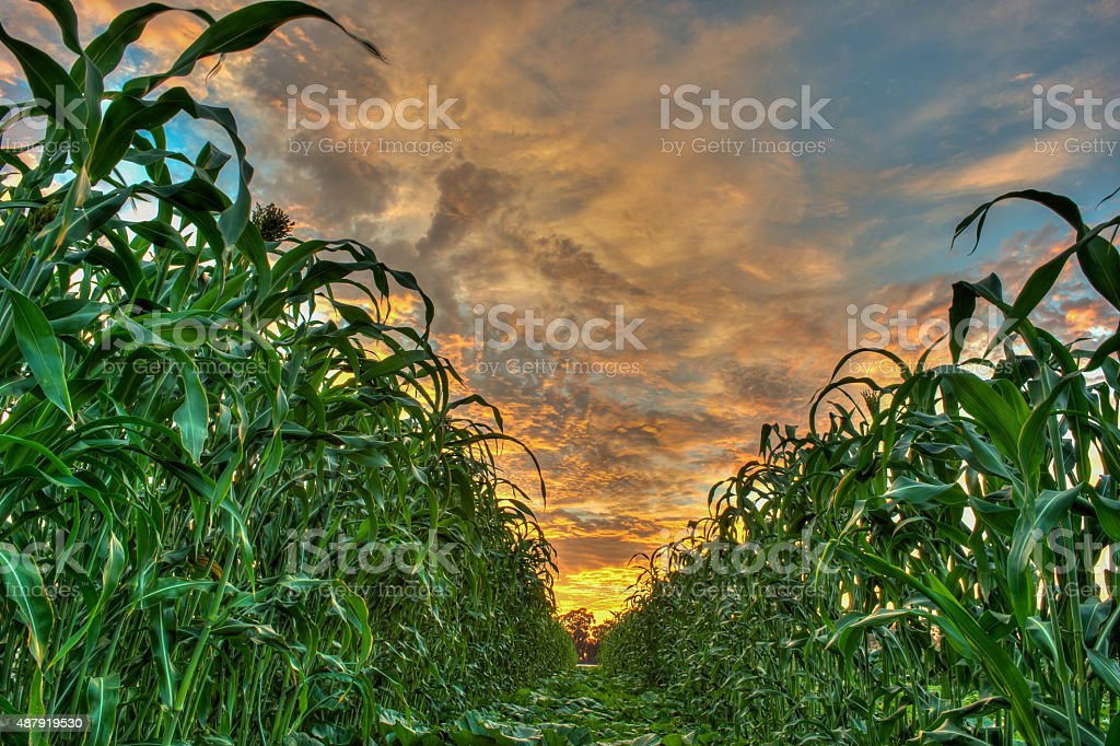 Vibrant sky dividing the crops stock photo