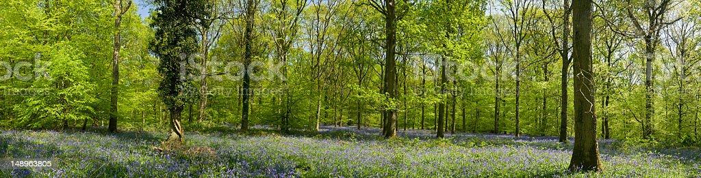 Vibrant Spring wild wood royalty-free stock photo