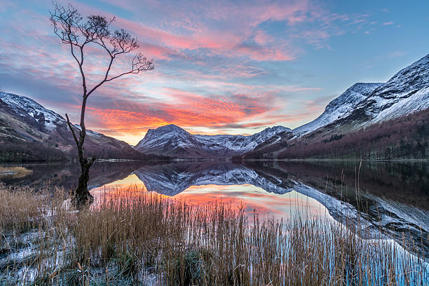 Vibrant Sunrise At Buttermere With Reflections And Snow On Mountains. A vibrant sunrise on a cold winter morning at Buttermere in the English Lake District. The photograph features an isolated bare tree in the foreground with the beautiful surrounding fells such as Fleetwith Pike covered in a layer of snow in the background. It was a still calm morning with no wind resulting in perfect reflections in the water. english lake district stock pictures, royalty-free photos & images