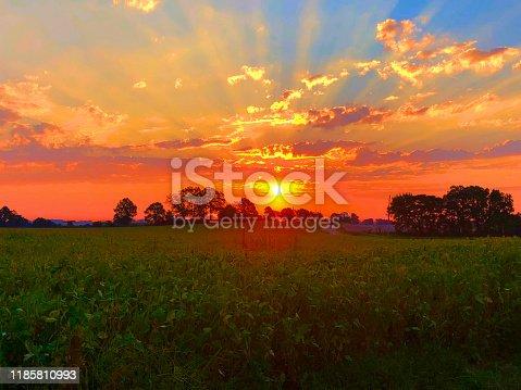 istock Vibrant Sunrise Over Lush Soybeans 1185810993