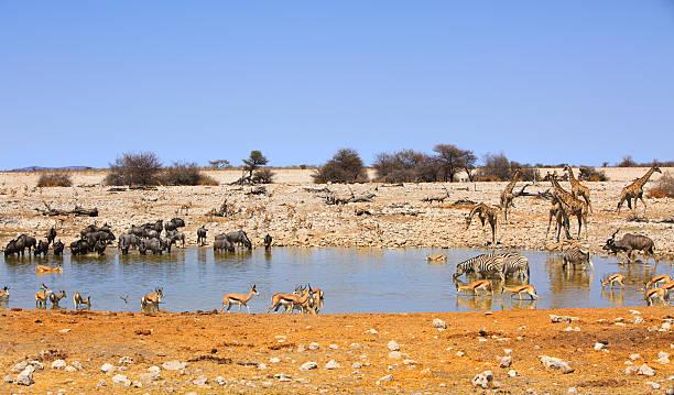 Vibrant waterhole in Etosha national park – Foto