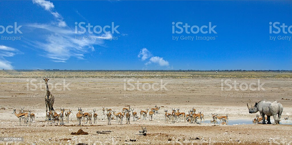 Vibrant waterhole in Etosha with Black rhino & Giraffe stock photo