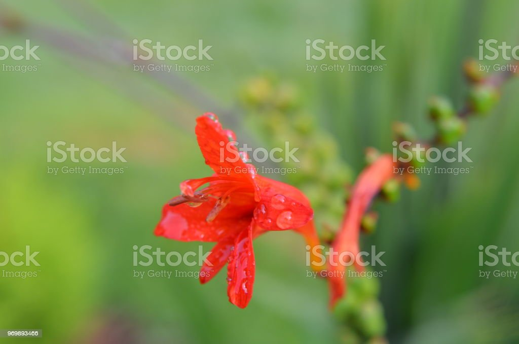 vibrant watery flower stock photo