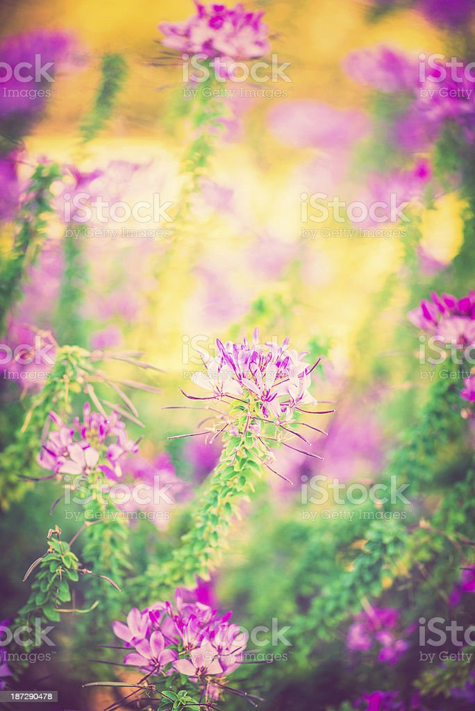 Vibrant Wild Flowers royalty-free stock photo