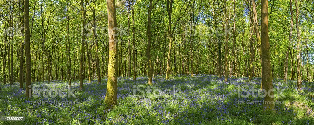 Vibrant wildflower woodland green forest foliage in idyllic nature panorama royalty-free stock photo