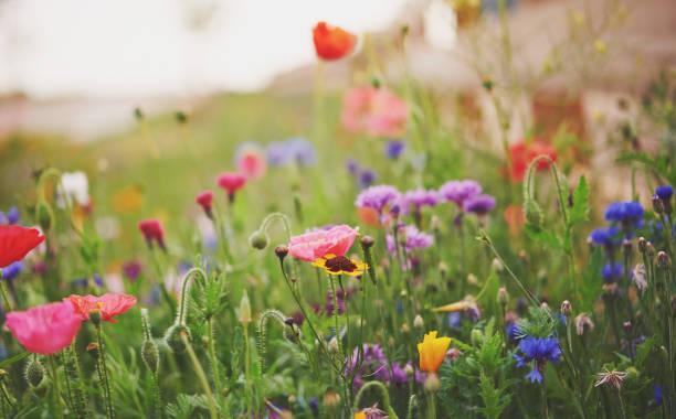 Lebendige Wildblumen im frühen Morgenlicht – Foto