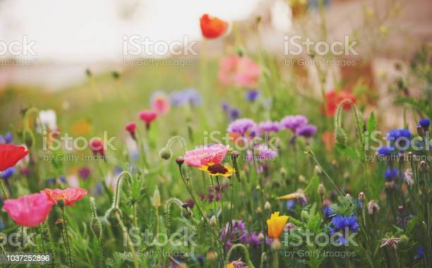 Photo of Vibrant wildflowers in early morning light