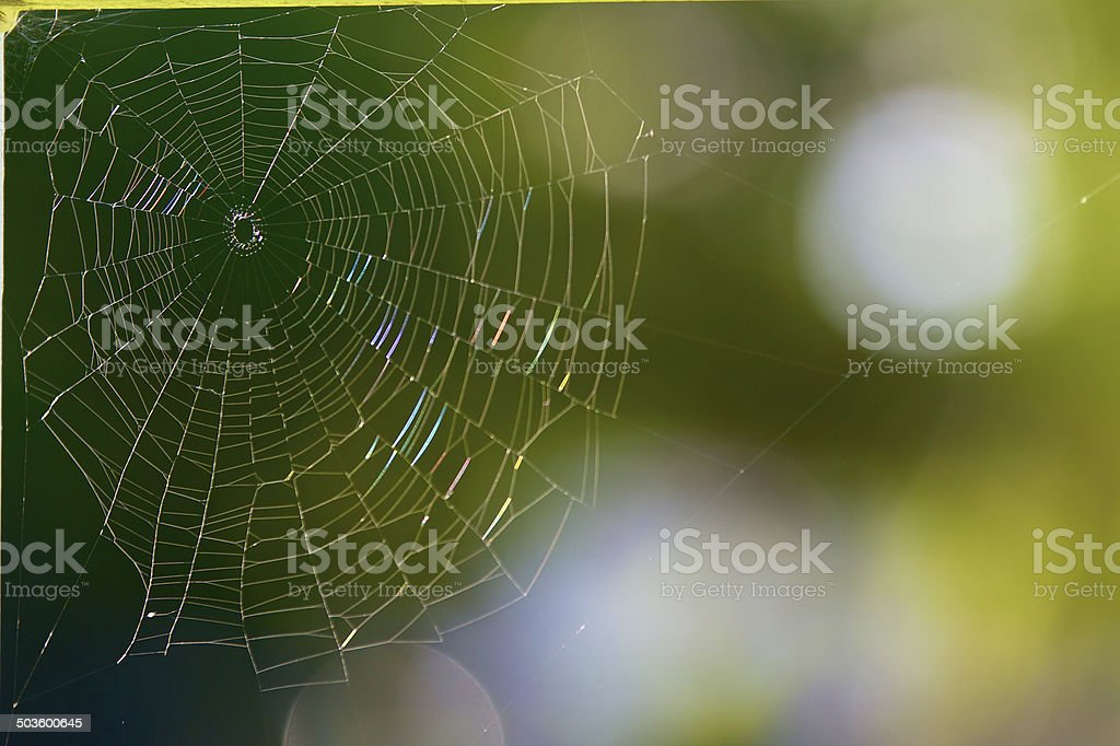 Vibrantly colored spider web stock photo