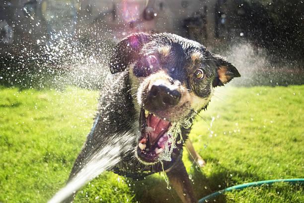 viciously cute dog stock photo
