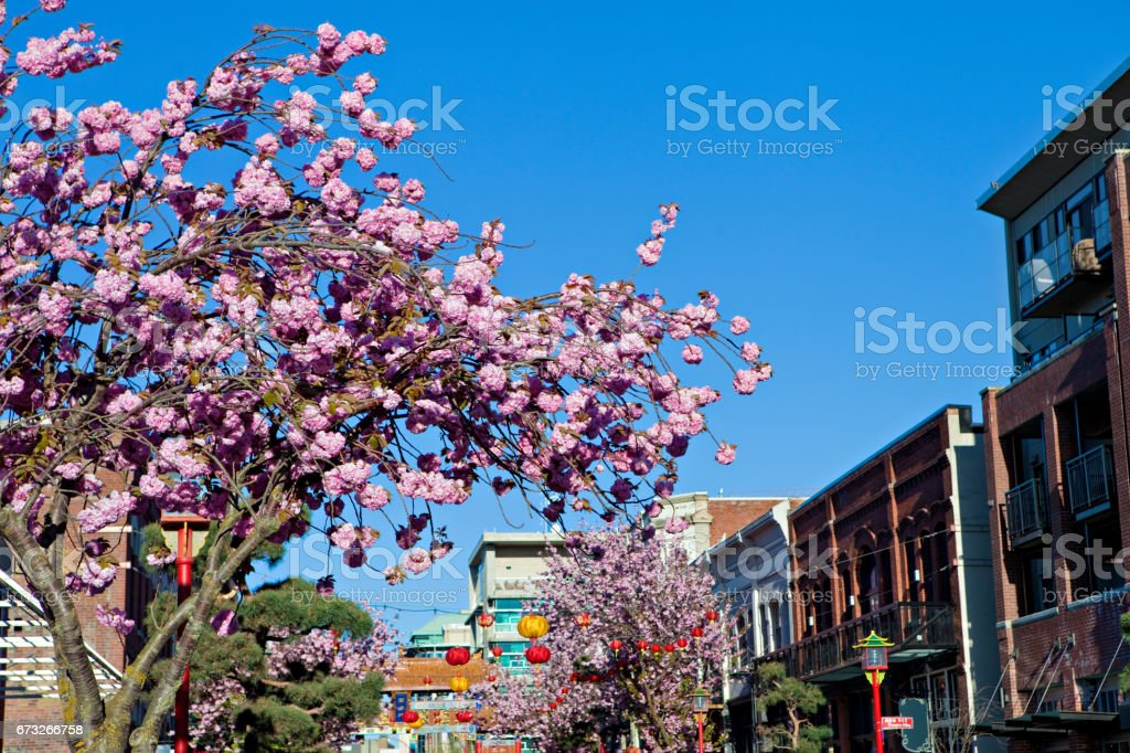 Victoria Chinatown stock photo