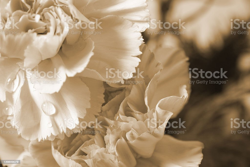 victorian flower royalty-free stock photo