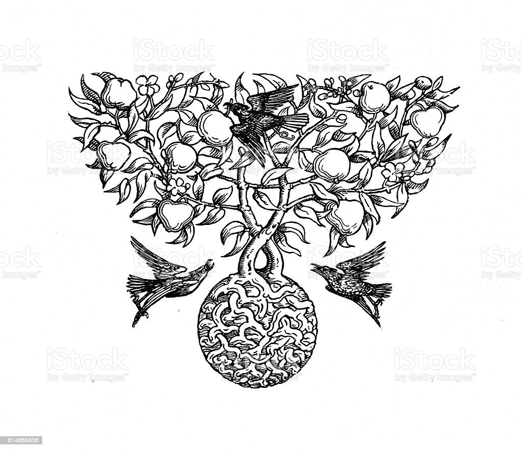 Victorian page illustration root ball tree birds fruit stock photo