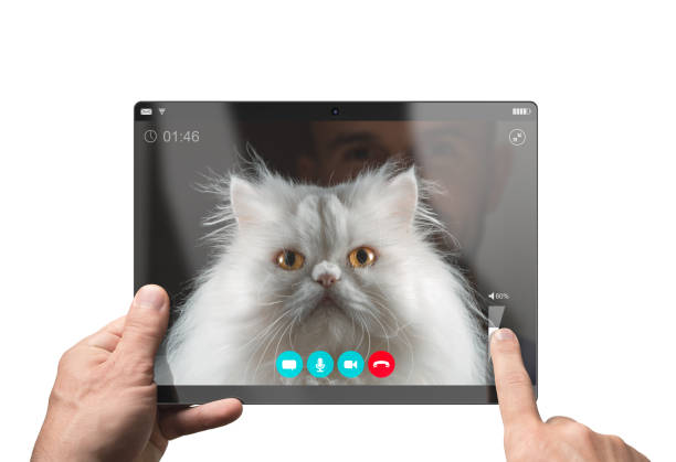 Video chat with a funny white persian cat isolated on white picture id1140143170?b=1&k=6&m=1140143170&s=612x612&w=0&h=esmsujl13ymbbntoui5n k pxeylf3betblohknobno=