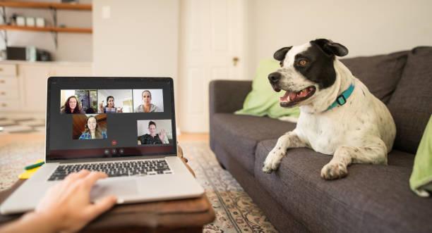 Video-Chat erleichtert die soziale Entsagung – Foto