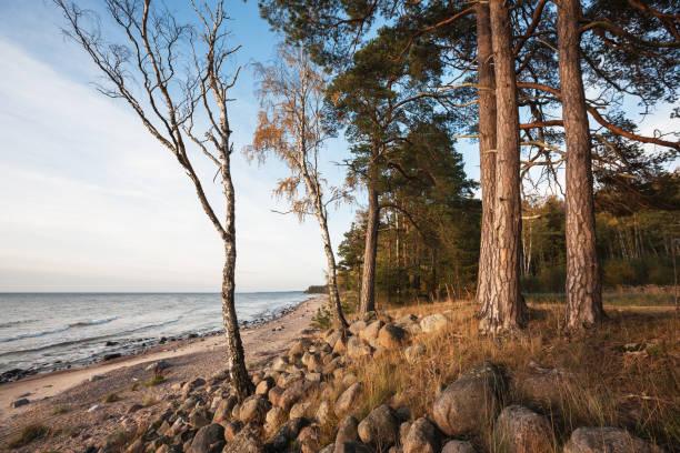 Vidzeme stony seashore stock photo