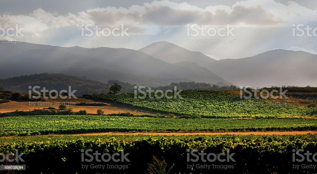 Viñedo y sierra de San Lorenzo, La Rioja stock photo